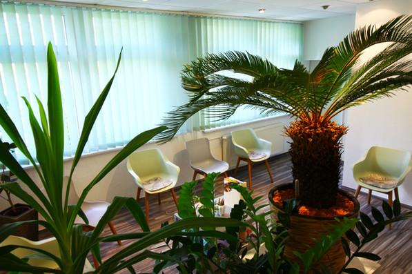 Wartezimmer Pflanzen