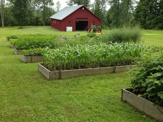 Gardening in January?