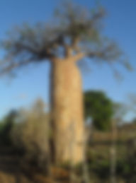 association, madagascar, baobab, solidarité,déforestation,humanitaire,montbrun les bains,enfants,voyage