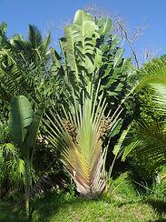 association madagascar, arbre du voyageur,déforestation,solidarité,urgence, artisanat,malgache,parrainage,montbrun les bains