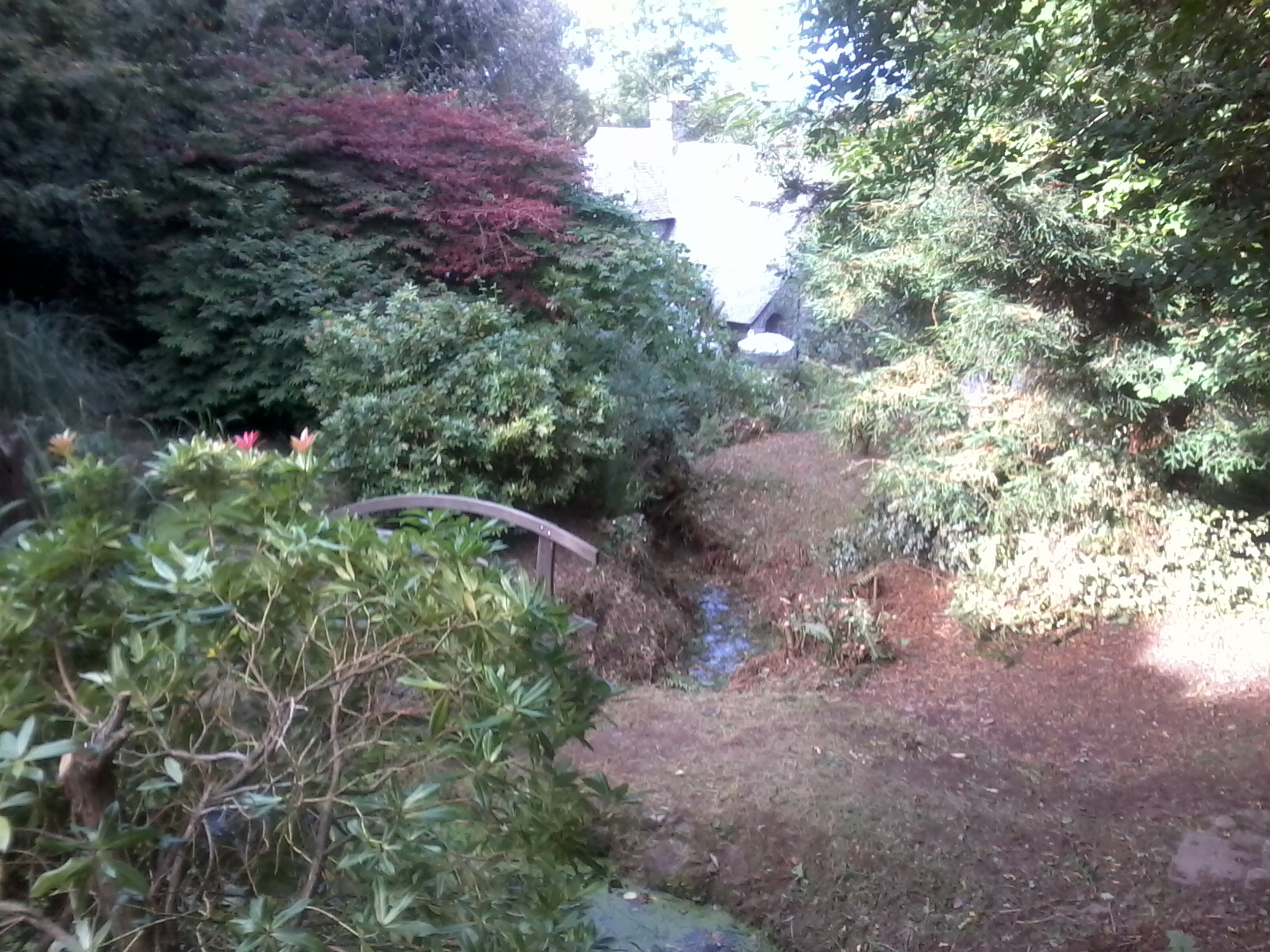 Another view of our wild garden