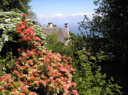 Rhododendron Splendour in May