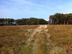 Our private moorland