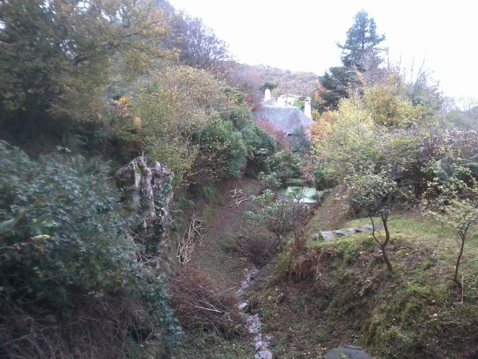 View of our Wild Garden