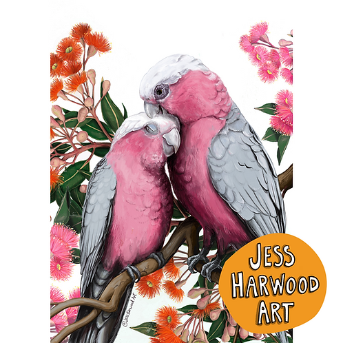 Galahs and Gumblossoms Fine Art Print