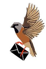 Single finch flying with envelope.jpg