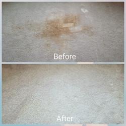 stain spot removal medford oregon