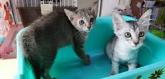 kitten2.jpeg