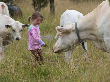 Kor som äter gräs bygger ekosystem samtidigt som de kan ge oss människor den perfekta maten.