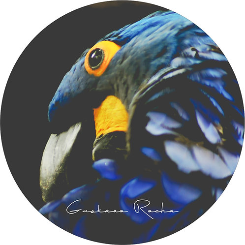 1 Porta Copos - Individual - Cores da Natureza Arara Azul -  Gustavo Rocha