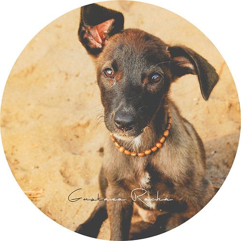 1 Porta Copos - Individual - Pet Cão - Gustavo Rocha