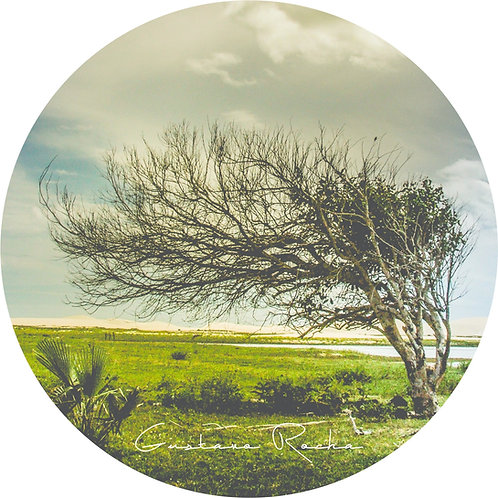 1 Porta Copos - Individual - Jericoacoara Árvore Preguiça - Gustavo Rocha
