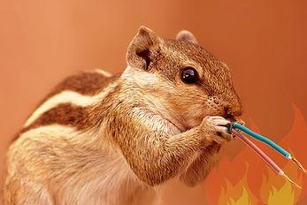 Anti Rodent Masterbatch / Anti Termite Masterbatch