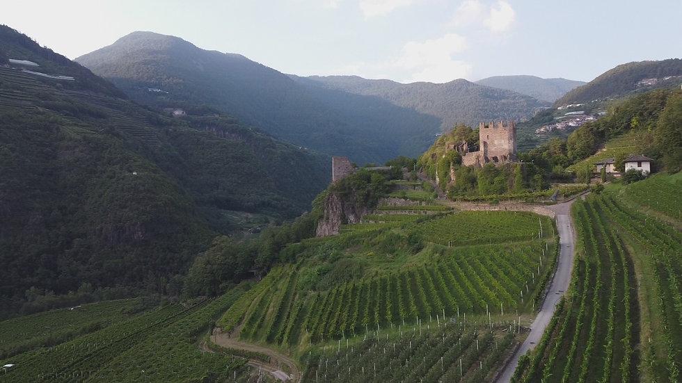 castello segonzano vineyardsjpg.jpg
