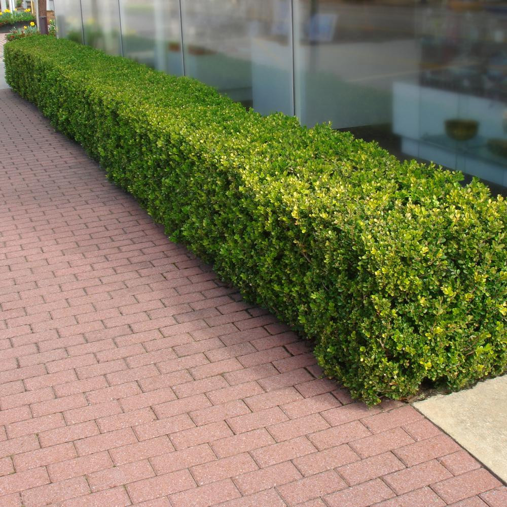 tips for working with a landscape architect boxwood