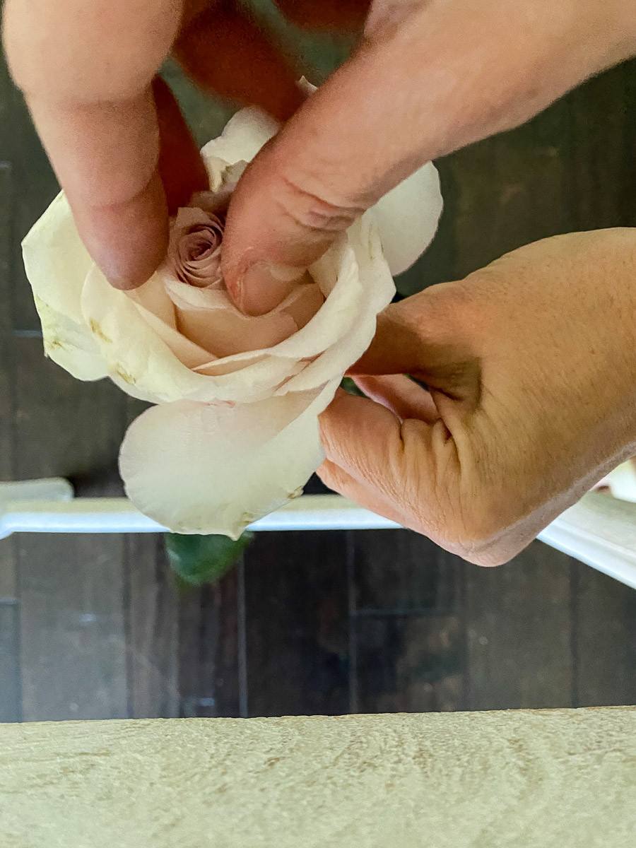 how to open a rose
