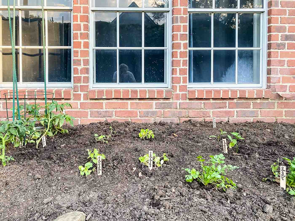 DIY backyard garden
