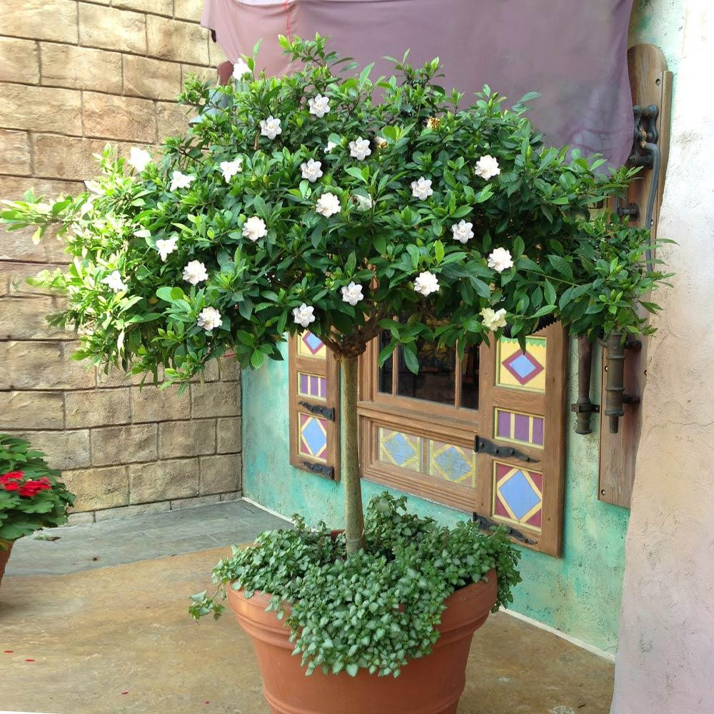tips for working with a landscape architect white camelia
