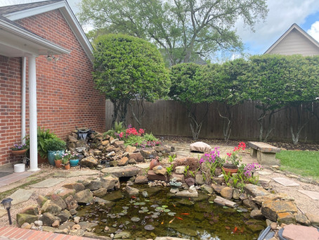 Backyard Makeover/Refresh- before photos and the plan