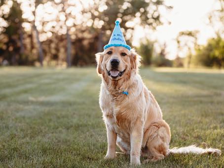 Ollie's First Birthday