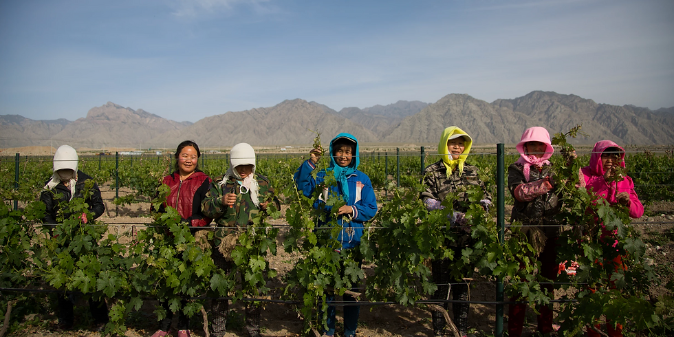 Taste of China Ep. 2: Fine Wine, Hand-Grabbed Mutton, and the Flavors of Ningxia