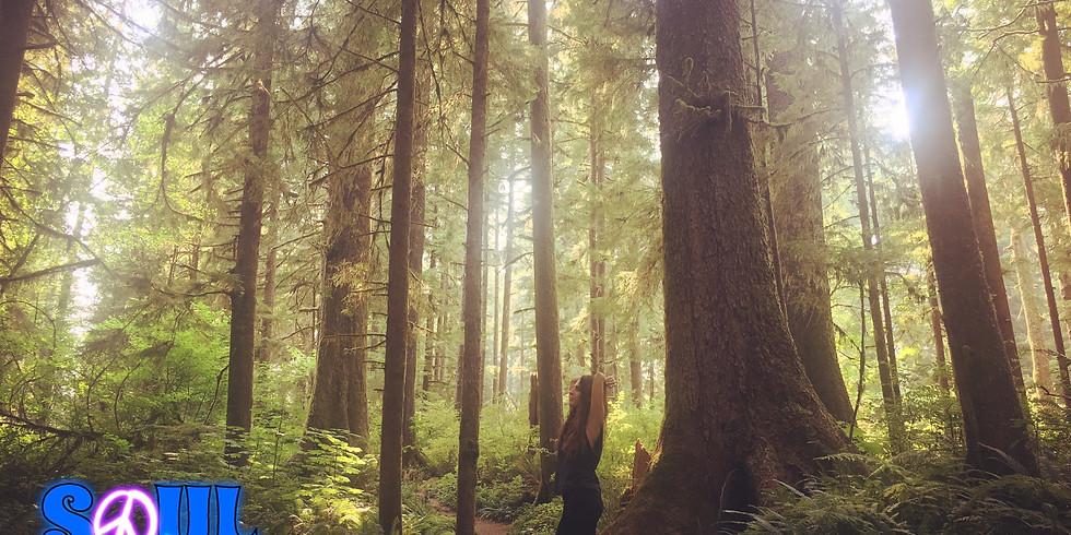 Soul Flow Retreat: Body*Mind*Soul Flow Hippie Hike