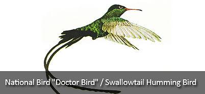jamaican-doctorbird.jpg