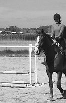maneggio roma sud equitazione cavalli scuola pony circolo ippico fontevivola centro equestre bambini bimbi festa fattoria