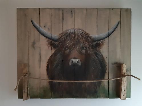 Schotse hooglander 87x70