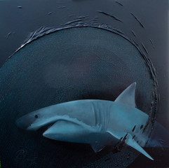 The Beauty of the Shark