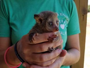 BushBaby Baby