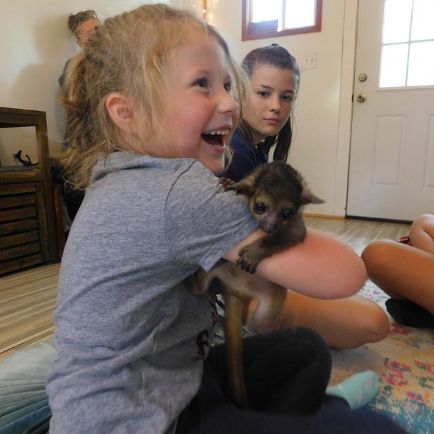 Animal Cuddle Cabin