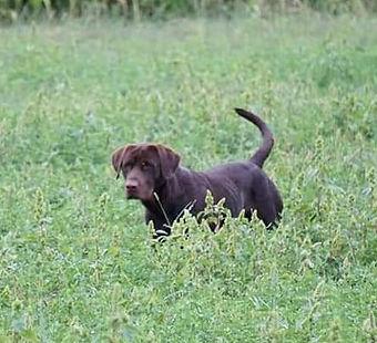 Ryker Alfalfa closeup.jpg