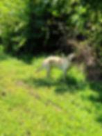 Misty 14 Jul 20 RH Side.jpg