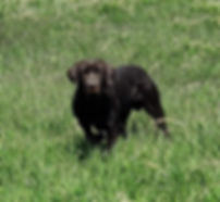 in upland field closeup.jpg