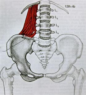 hip flexor drawing