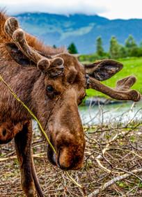 Portage (Alaska)