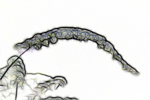 Blüten-Neon