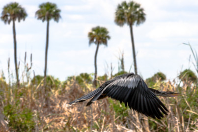 Everglades (Florida)