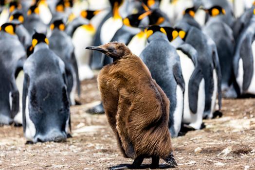 Falkland Islands (Argentinien)