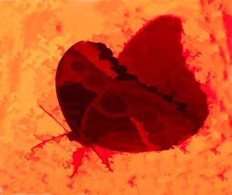 Schmetter-Rot