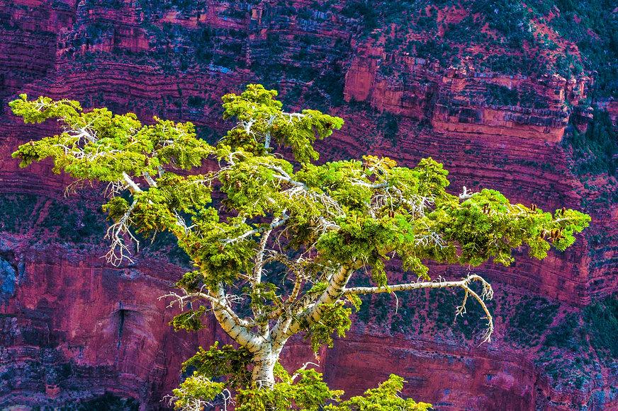 grand-canyon-north-rim-2015-24.jpg