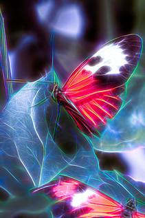 Schmetterling Neon