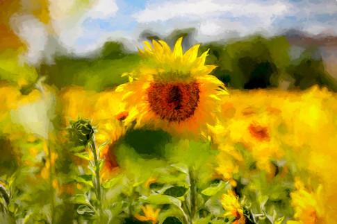 Sonnen-Feld