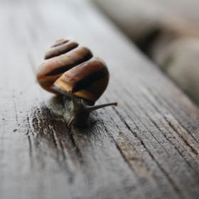 Snail's Eye View