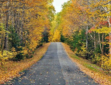 autumn-road-in-maine-K2TBQ78.jpg
