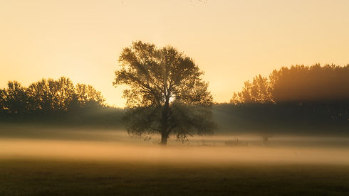 big-tree-on-meadow-ESV86G7.jpeg