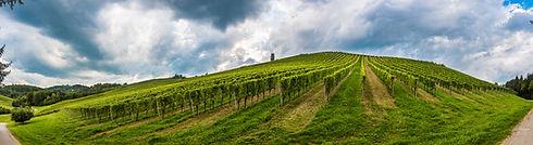 vineyard-panorama-on-an-austrian-country