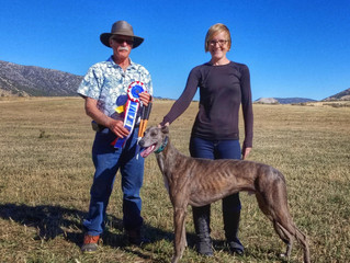 Pocatello Kennel Club - BIF #6 for Sonic!!