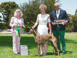 Greyhound Club of America National Specialty
